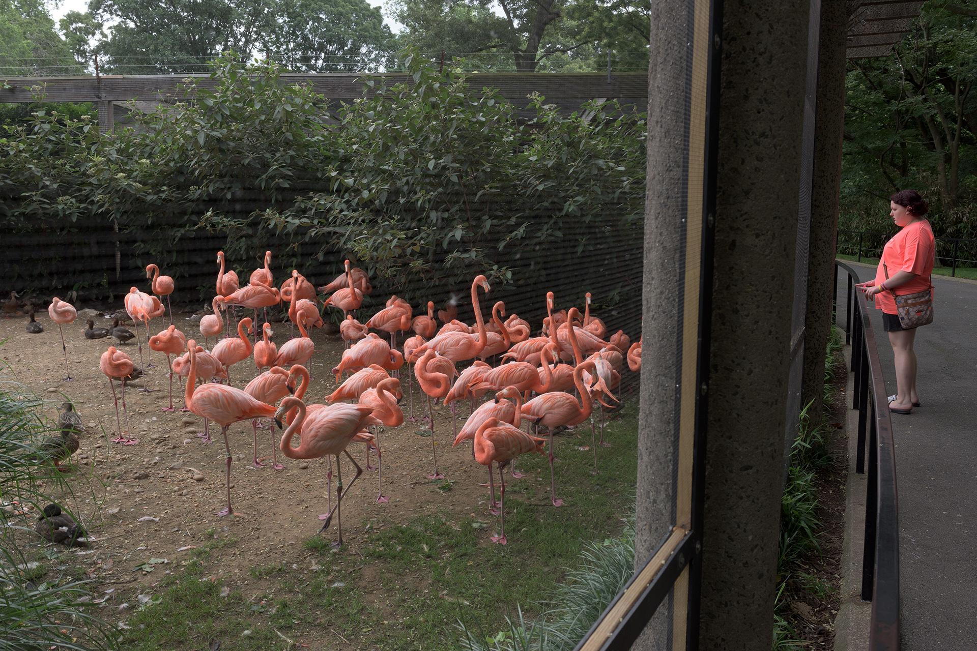 zoo-3262