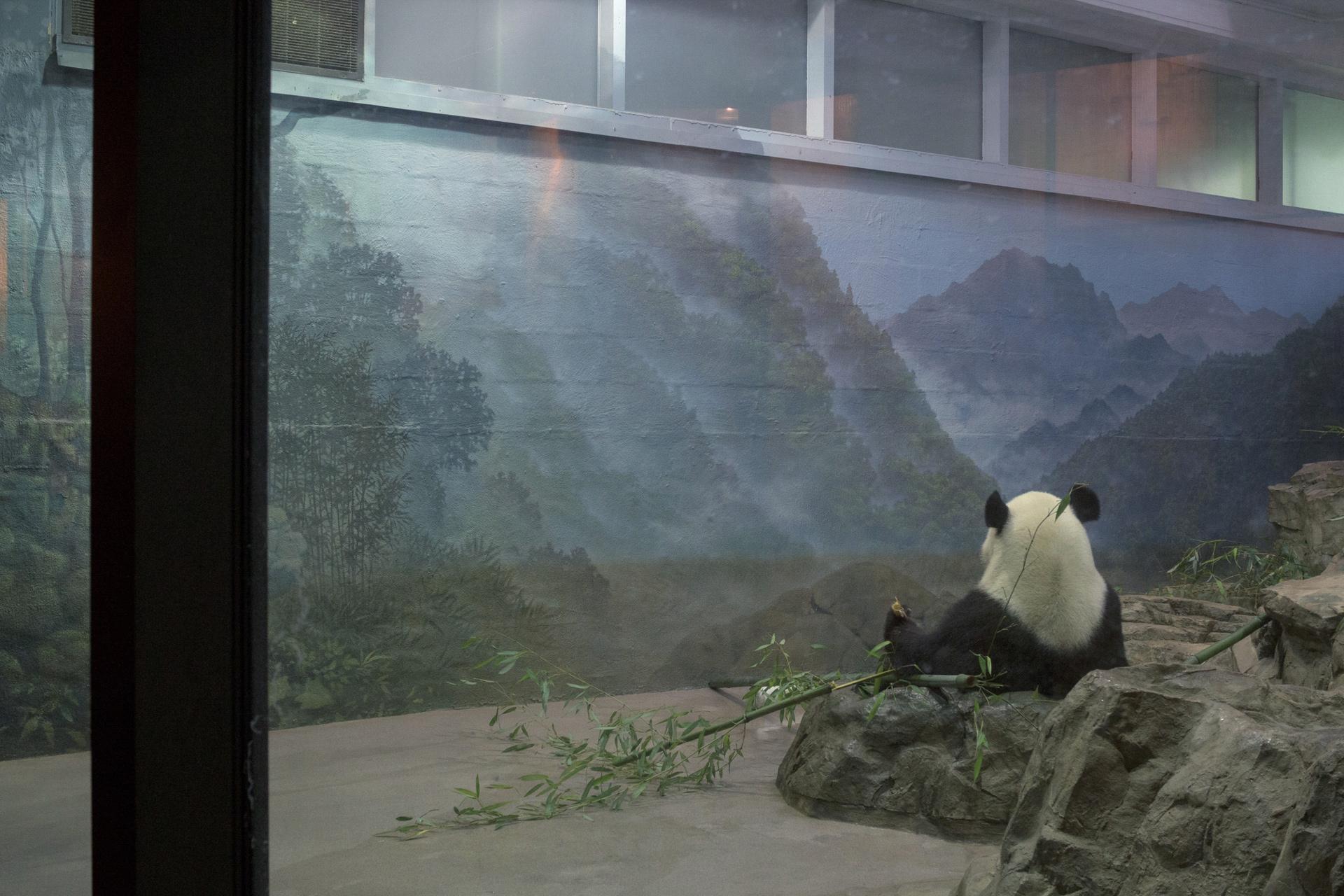 zoo-3268