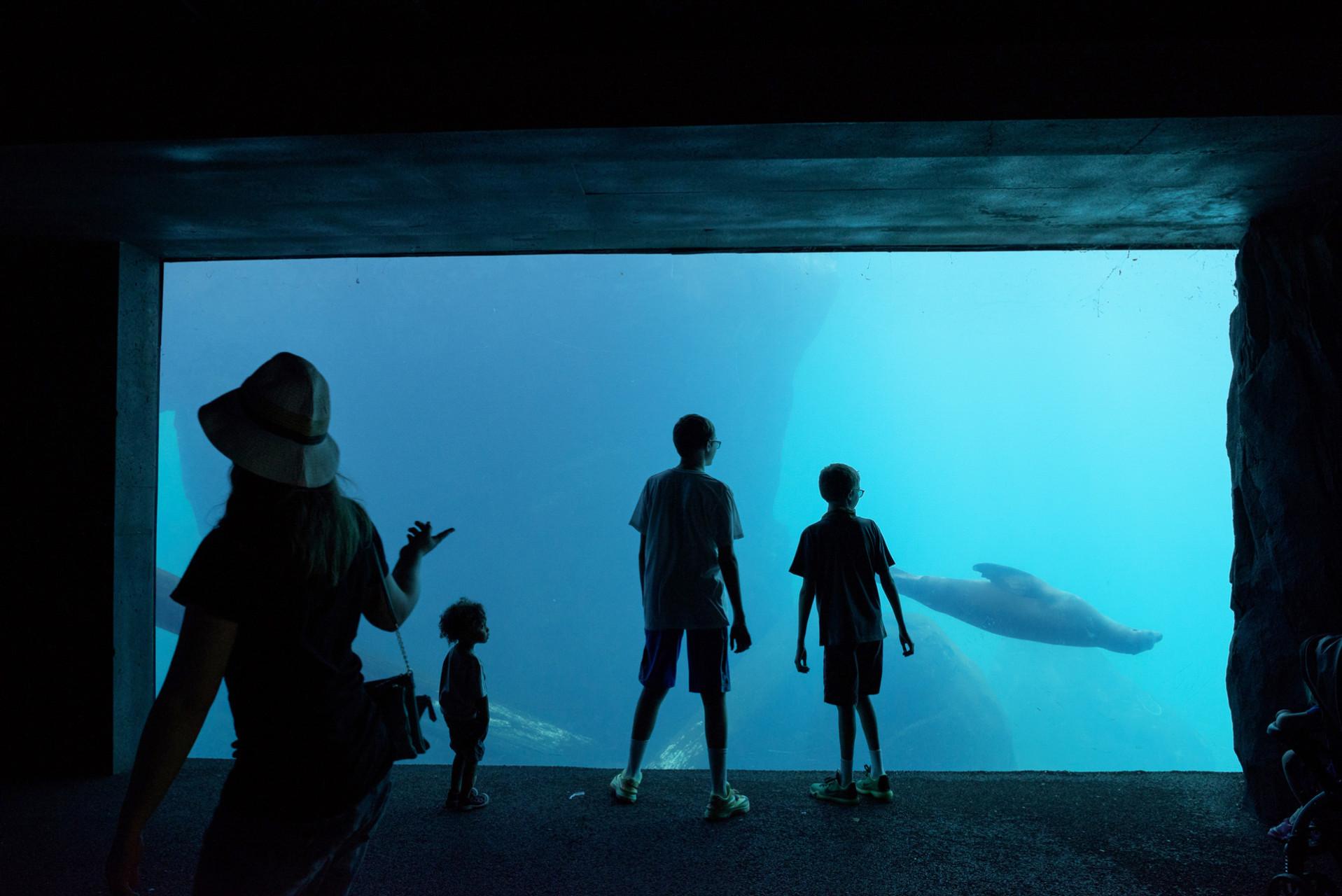 zoo-4469