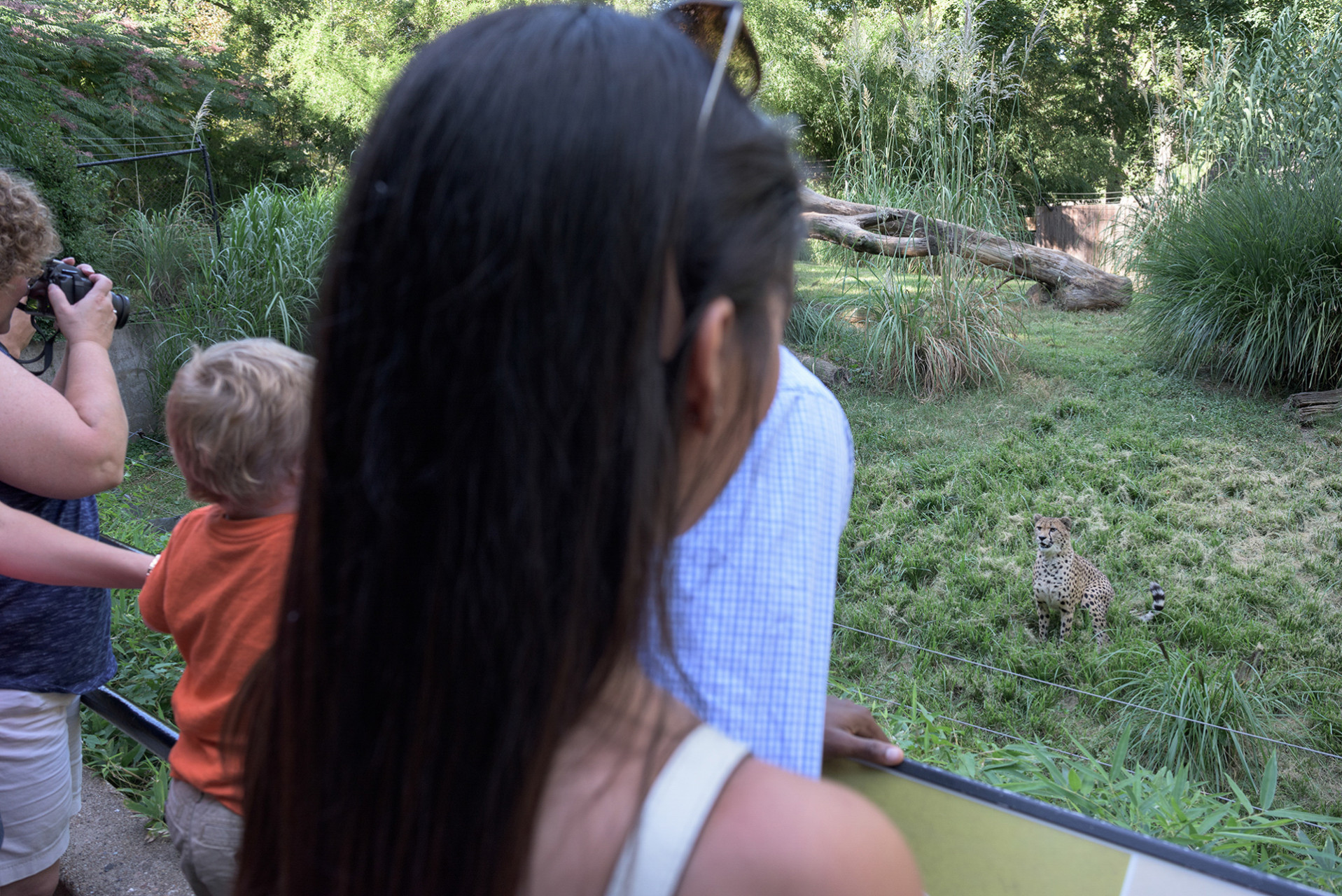 zoo-5038